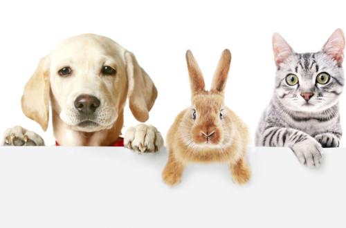 Cuidados mascotas